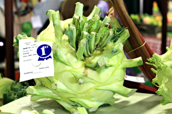 giant-kohlrabi-puyallup-fair-pictures