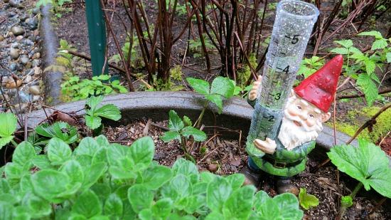 gnome rain gauge