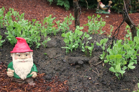 Backyard Gardening – Raised Garden Bed Pictures