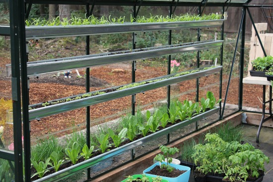 Growing Vegetables In A Greenhouse Spinach Lettuce