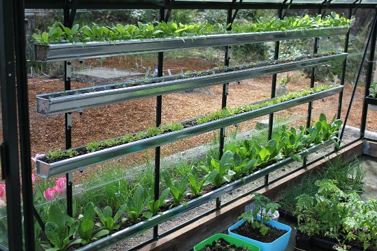growing food in gutters