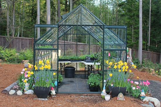 how to grow vegetables in a greenhouse