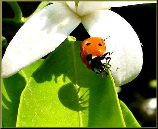 Protect Your Garden with Beneficial Insects