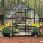 How to Grow Vegetables in a Greenhouse – Lettuce, Spinach, Tomatoes, Basil and More