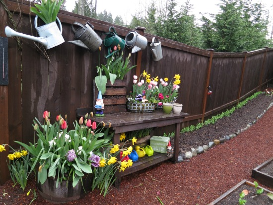 Mavis Butterfield | Backyard Garden Plot Pictures – Week 15 of 52