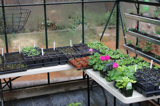 planting tables greenhouse