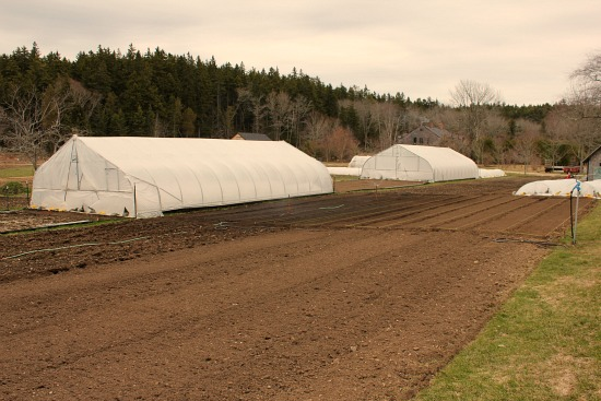 poly tunnel greenhouse eliot coleman four season farm