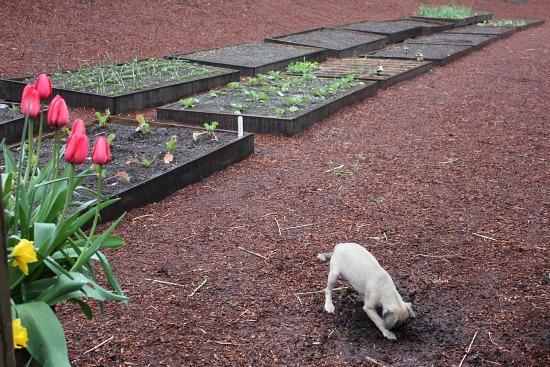 raised garden beds home gardener