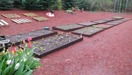 raised garden beds red bark