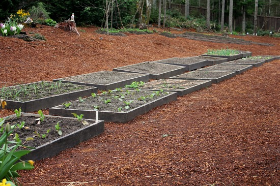 Backyard Gardening – Raised Garden Beds