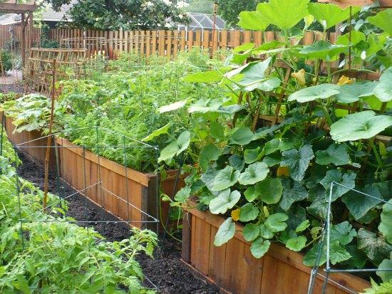 raised garden planters container gardening