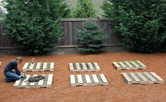 Wood Pallet Garden Update – Lettuce and Strawberries
