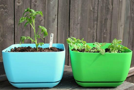simple garden starter kit