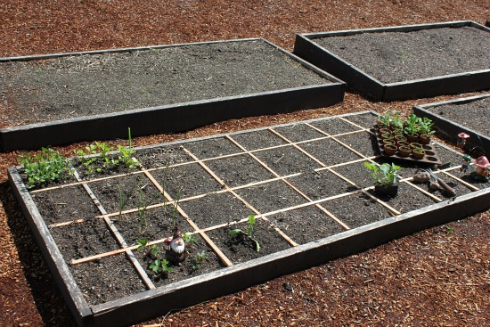 Can You Grow Potatoes in a Square Foot Garden?