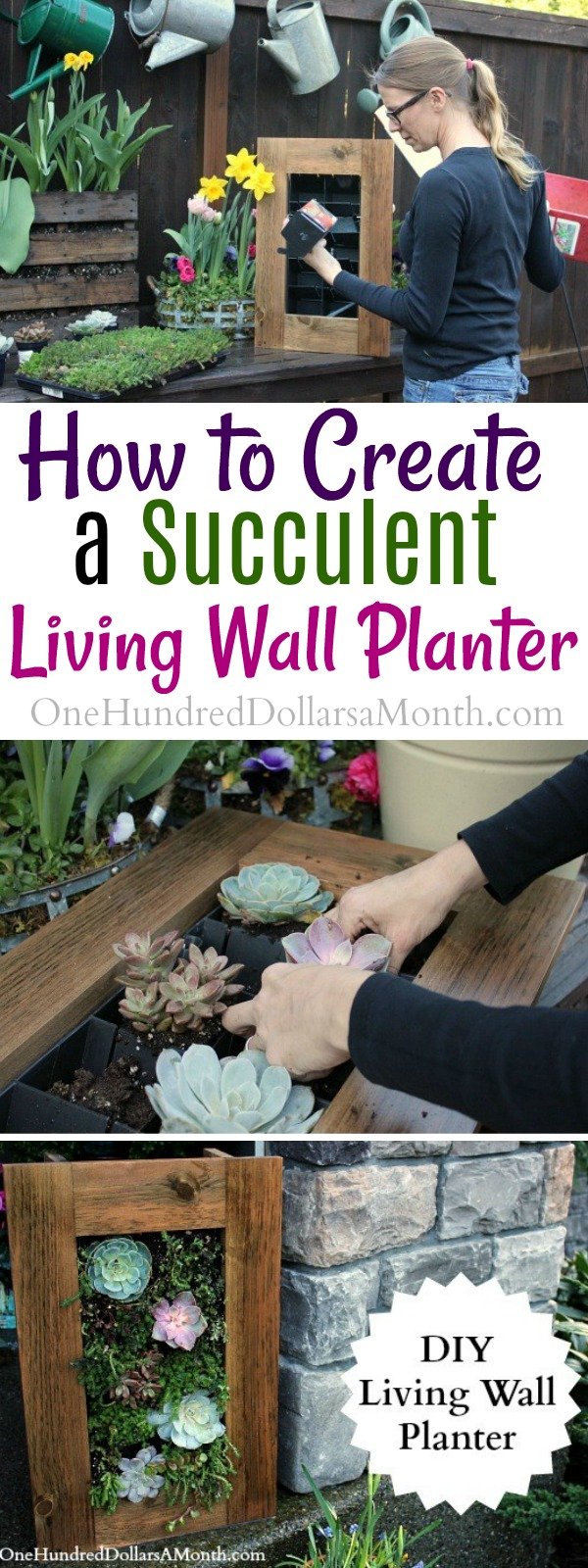 DIY Sedum and Succulent Living Wall Planter