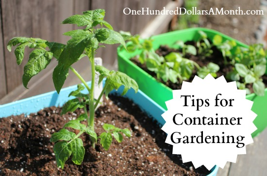 tips-for-container-gardening. ...