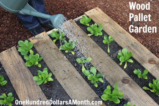 DIY Wood Pallet Garden – Spinach, Lettuce, Celery, Strawberries and Boy Choy