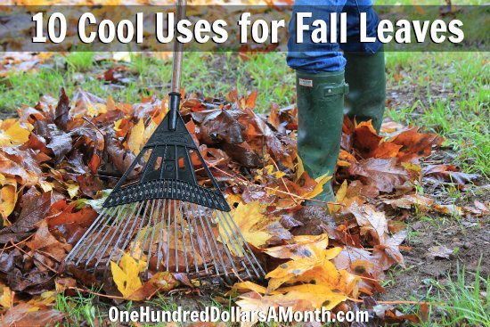10 cool uses for fall leaves