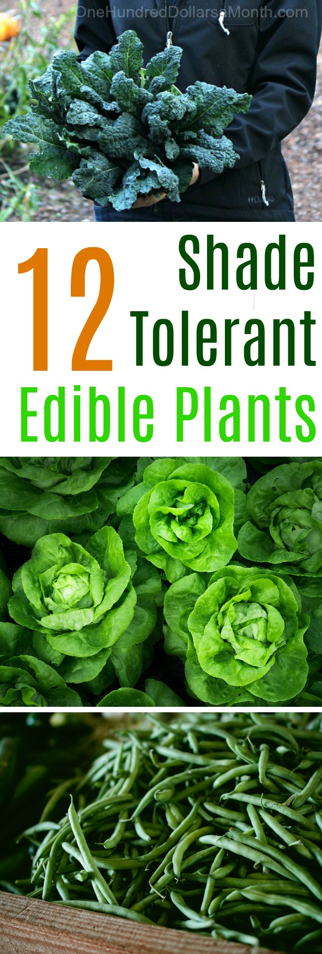 10 Shade Tolerant Edible Plants