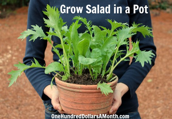 Container gardening idea grow salad in a pot - Salads can grow pots eat fresh ...