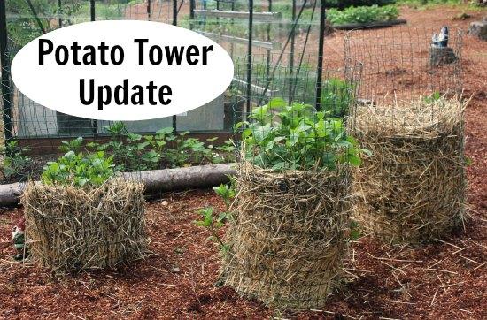 DIY Potato towers