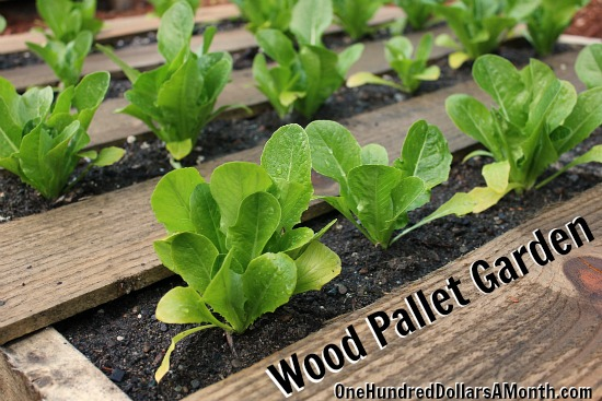 DIY Recycled Wood Pallet Garden