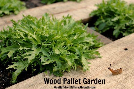 DIY Wood Pallet Gardening slugs