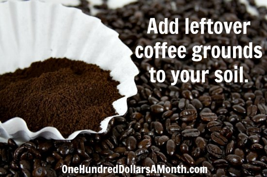 Garden Tip – Add Leftover Coffee Grounds to Your Soil