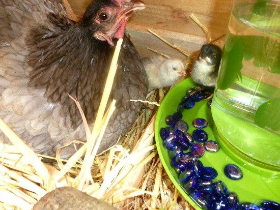 Sylvia From Salem, Oregon Shares Her Garden Photos
