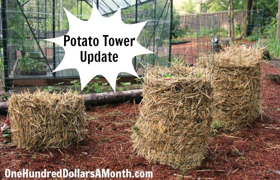 how to grow potatoes in texas