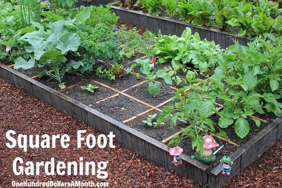 Square Foot Gardening – Slugs Ate My Cucumber Plants