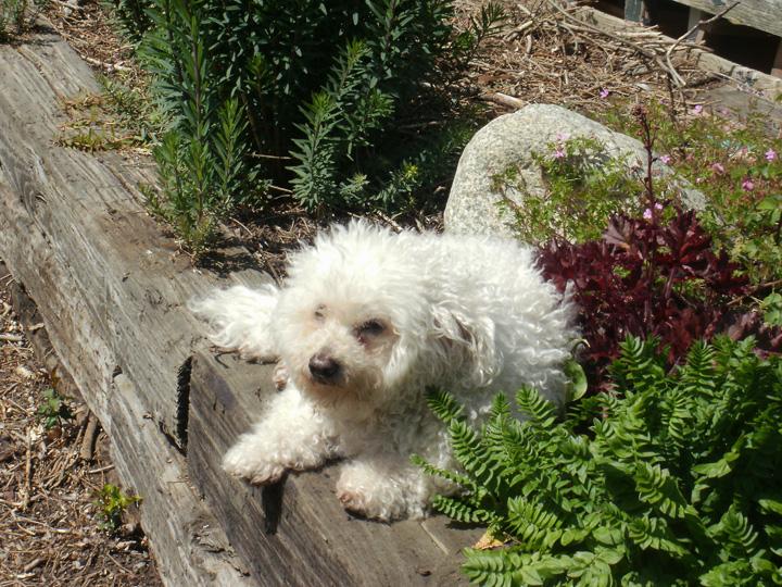 Andi From Mt. Vernon, Washington Shares Her Garden Photos