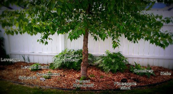 Jen From Northern Idaho Send In Her Garden Photos