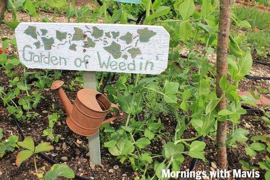 cool garden signs