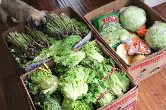 Food Waste in America – What Does it Look Like