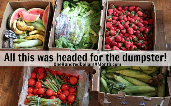 Food Waste In America – Saving Fruits and Vegetables From the Dumpster