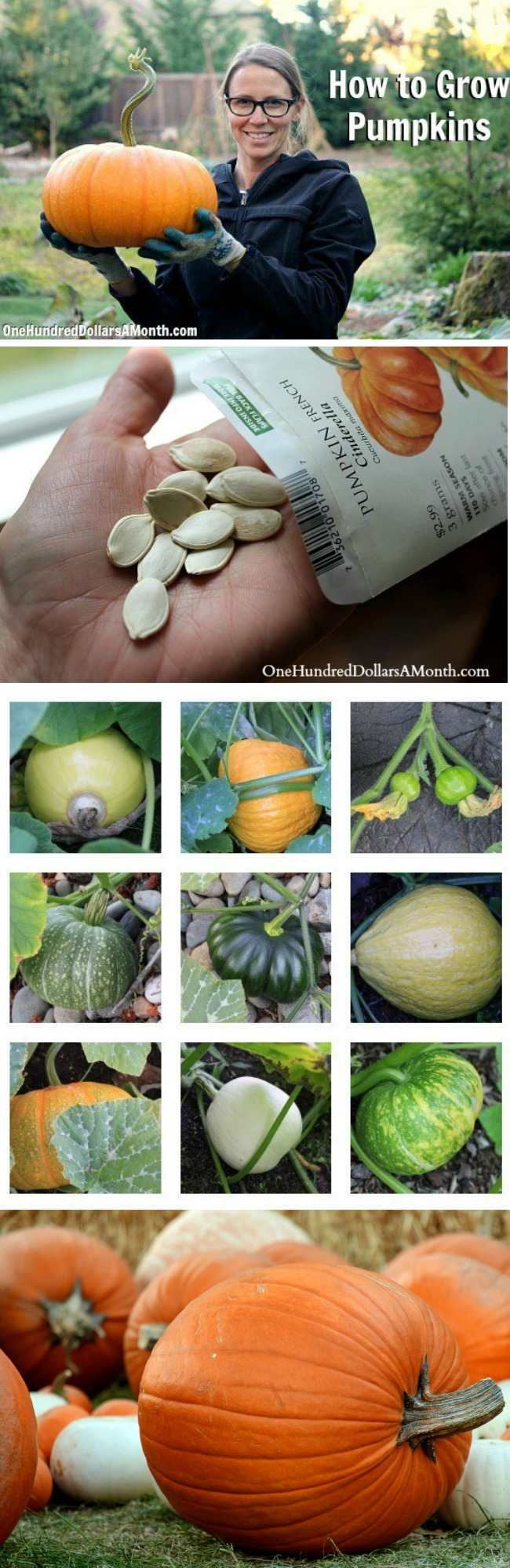 How to Grow Pumpkins {Start to Finish}