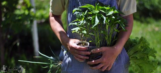 Mavis Mail – Vasi From Romania Sends in Her Garden Photos