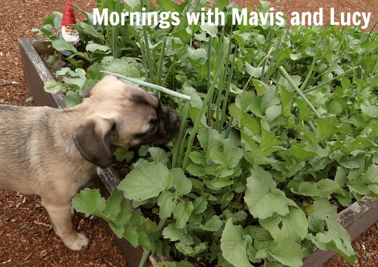 mornings with mavis