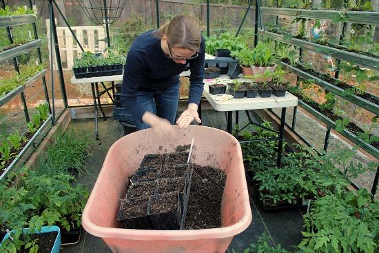 Mavis Garden Blog – Planting Squash Seeds