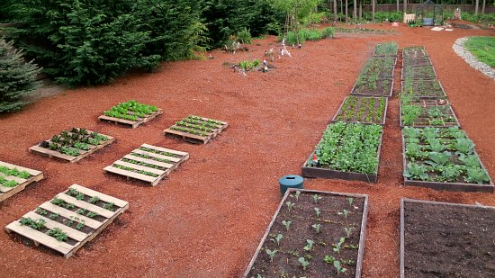 Mavis Butterfield | Backyard Garden Plot Pictures – Week 20 of 52
