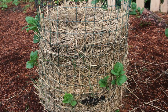 DIY Potato Towers and an Update