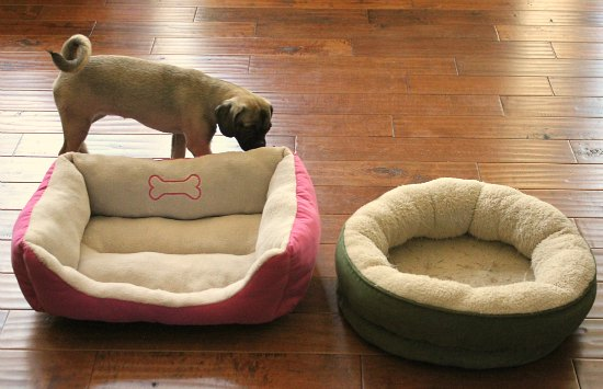 Is There A Good Way to Introduce a Dog to a New Bed?