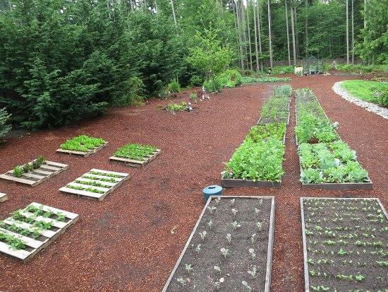 Mavis Butterfield | Backyard Garden Plot Pictures – Week 22 of 52