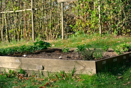 raised garden beds herb garden