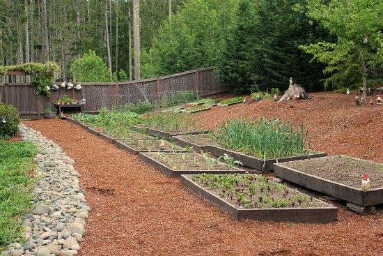 raised garden beds mavis blog