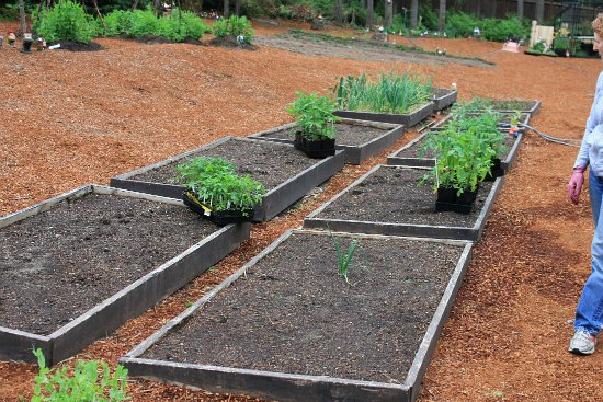 Mavis Garden Blog – Planting Tomatoes in Raised Garden Beds