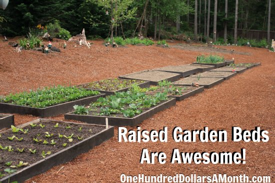 Raised Garden Beds – Cabbage, Radishes, Onions, Broccoli, Garlic Beets and More