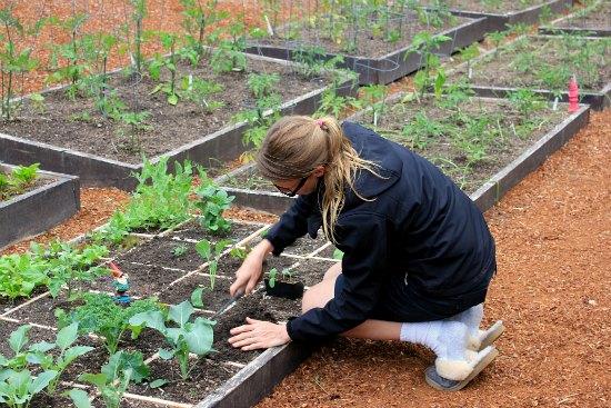 square foot gardening organic mavis garden blog
