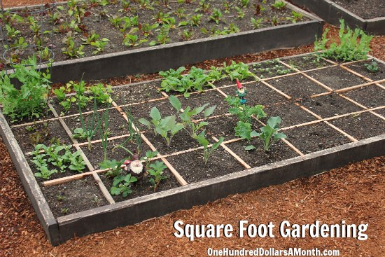 Square Foot Gardening – Potatoes, Onions, Strawberries, Kale and More